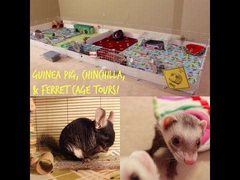 Guinea Pig, Chinchilla, & Ferret Cage Tours