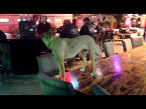 Dog at Full Throttle Saloon Sturgis South Dakota