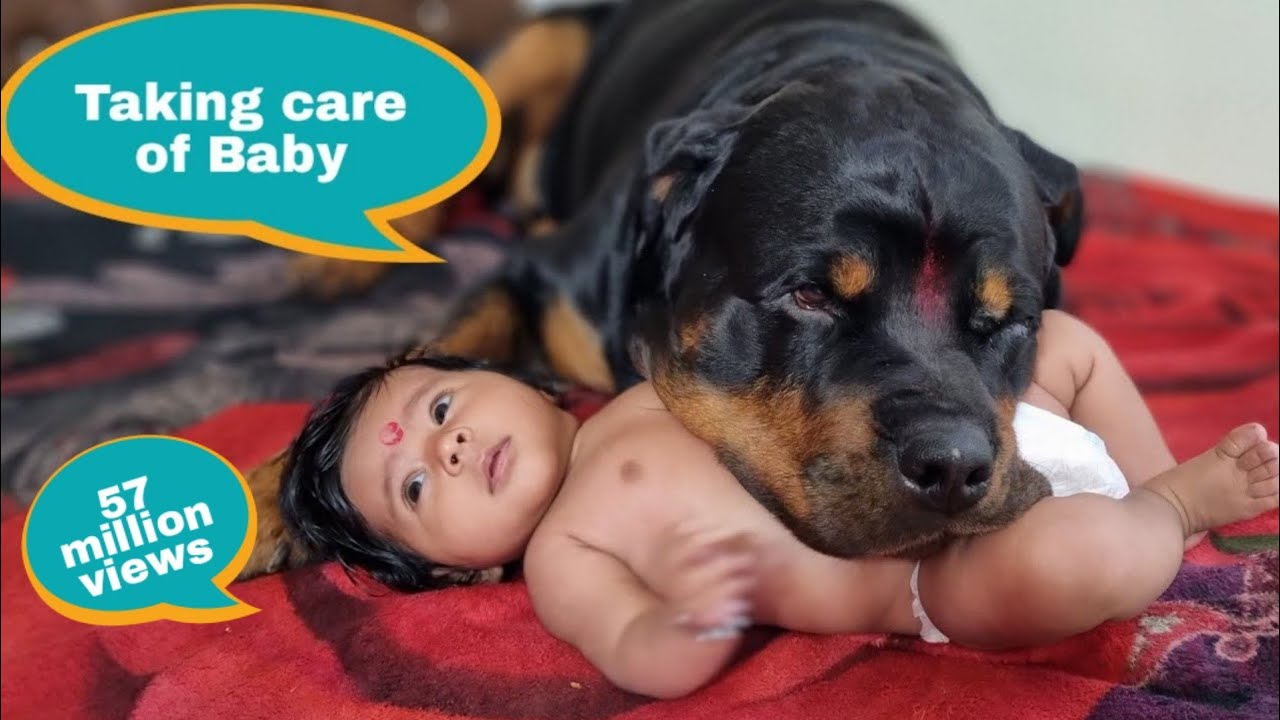 Jerry and Aaru are made for each other.Dog protecting baby