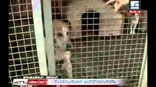 სიუჟეტი ძაღლების თავშესაფარზე 30 03 2012