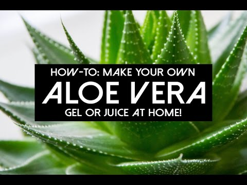 How To Make Your Own Aloe Vera Gel and Juice at Home | DIY Green Living | KRYSNATURALLY