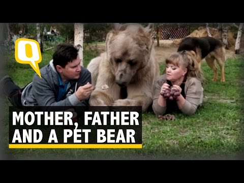 The Quint: Forget Dogs, This Russian Family Has a Cuddly Bear as a Pet
