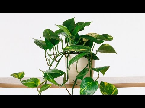 Growing Indoor Plants | Southern Living