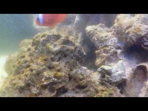How to Deal with a Green Algae Bloom in New Marine Saltwater Coral Aquarium