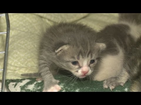 If you see a tiny kitten leave it alone, Albuquerque Welfare warns