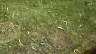 Simplicity 7116 garden tractor giant weed showdown!