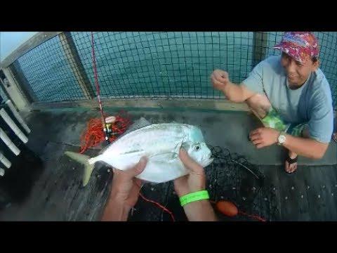 Sabiki Jigging, Hard Tail and Atlantic Moonfish, Navarre Pier
