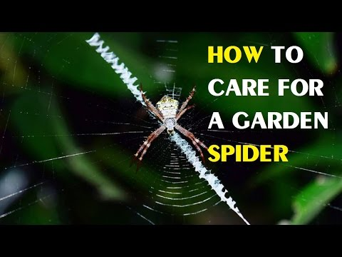 How to Care for a Garden Spider