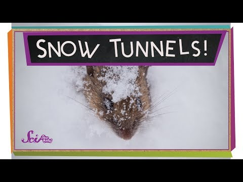 Tunnels in the Snow!