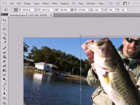 Photoshop CS5 how to make your fish look bigger