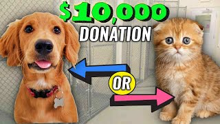 I Let My Instagram Followers Decide What Shelter gets $10,000! (Dog or Cat rescue, Small or Large?)