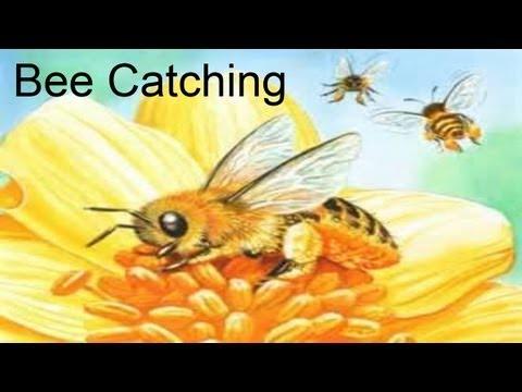 Animal Crossing (Gamecube): Bee Catching Tutorial (April 24, 2013)