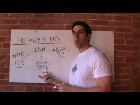 What Makes Up Your Metabolic Rate?