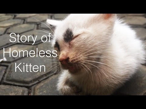 Story of homeless kitten-Rescue kitten