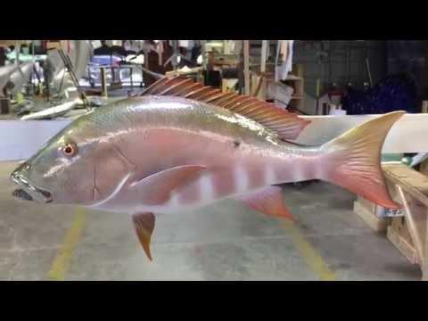 Mutton Snapper Fishmount   Gray Taxidermy Fishmounts, Fish replicas