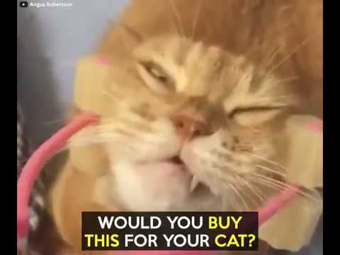 Cat Relaxer   Cat Massage Roller