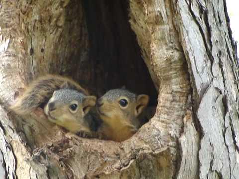 Baby squirrels in nest