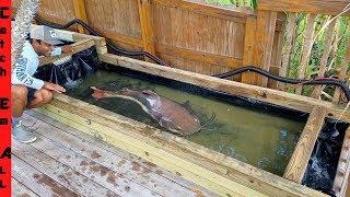 BUILDING EXOTIC MULTI-LEVEL FISH POND! **Catfish Level Shallow Water**