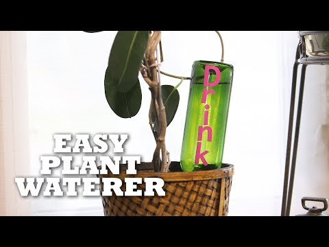 DIY 'On Vacation' Plant Waterer