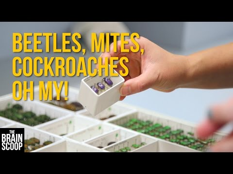Beetles, Mites, Cockroaches Oh My! [Insect Collection Tour]