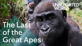 Critically endangered: The plight of Cameroon