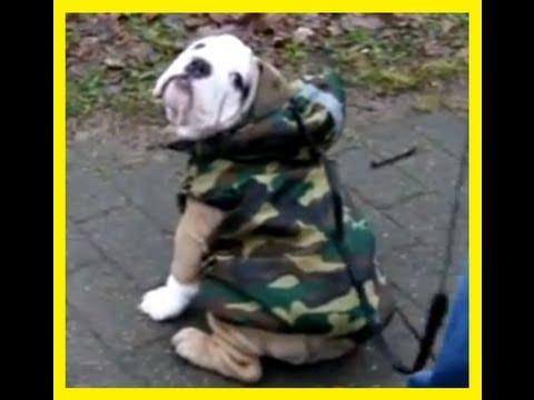 My Bulldog Puppy 's FIRST WALK outside ◄ DONT MISS! Soooo cute
