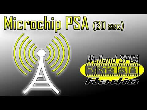 The Importance of Current Pet Microchip Info (Audio Only)