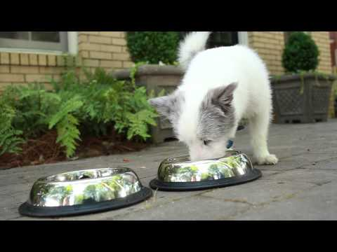Iams® Puppy Food Video