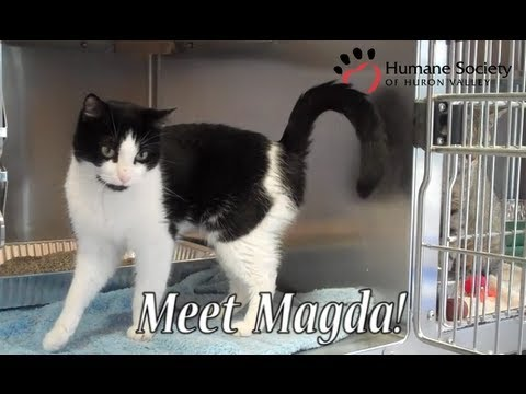 Meet Magda, a black and white cat