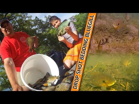 How to Drop Shot Bedding Panfish