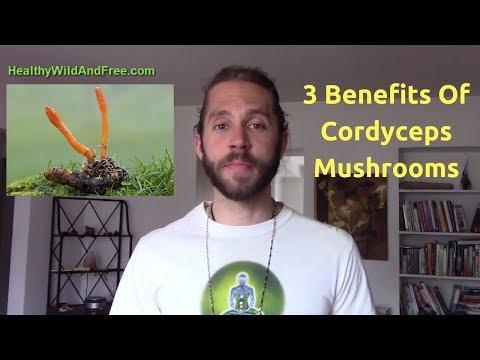 3 Benefits Of Cordyceps Mushroom -- Immunity, Brain, Energy ATP Supplier