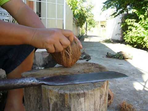 How to open coconut easy with machete (parang)