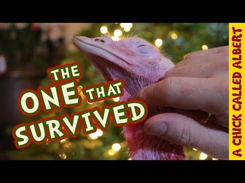 This Christmas I Saved A Turkey