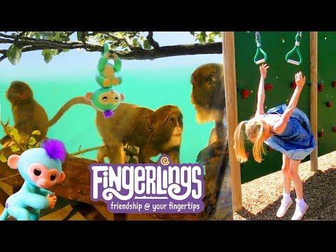 Fingerlings meet real monkeys at the zoo