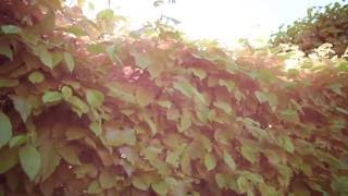 Infrared penetrating through plants!