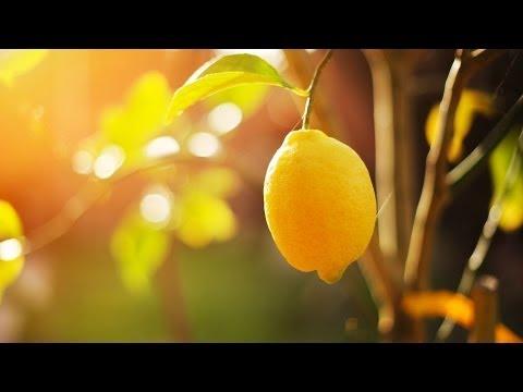Should You Put Lemon on Your Face? | Skin Care