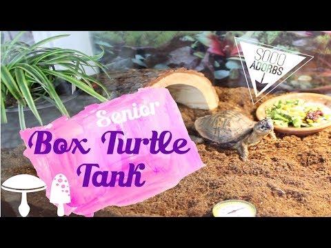 Box Turtle Tank Setup | Senior/Special Needs Turtle & Tortoise