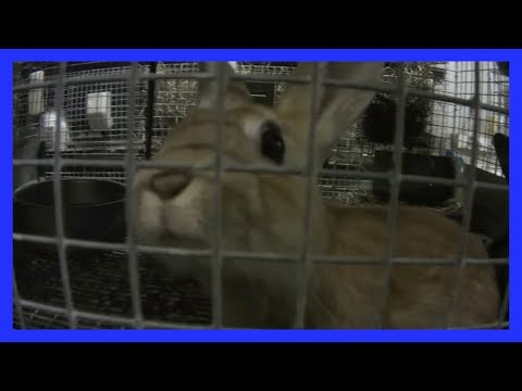 Animals Frozen to Death at Petco and PetSmart Supplier