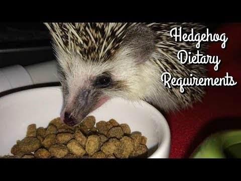 Hedgehog Care: Dietary Requirements & What I Feed