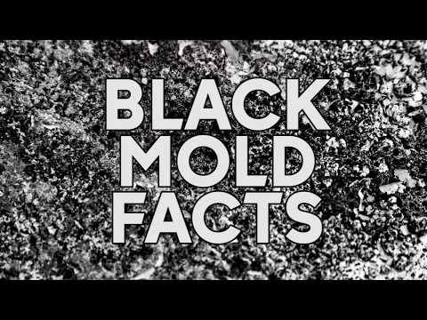 DANGEROUS BLACK MOLD: what to know