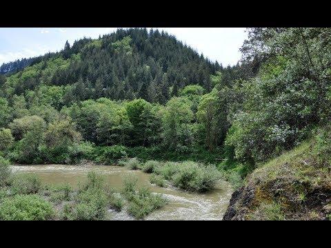 Bigfoot Raids Farm Near Coquille, Oregon