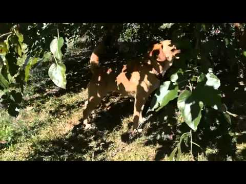 Barking dog in backyard - Solution?