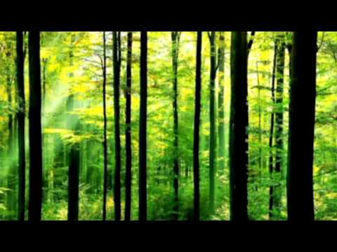 Forest And Nature Sounds   Sound Effect 9