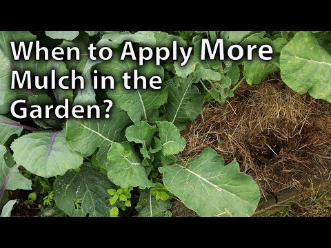 When to Top-up Mulch in your Vegetable Garden