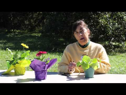 How to Cut Back Gerbera Daisy Leaves : Gerbera Plant Care