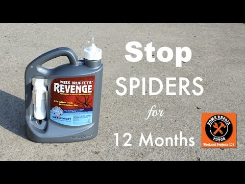 Get Rid of Spiders with Miss Muffets Revenge -- by Home Repair Tutor