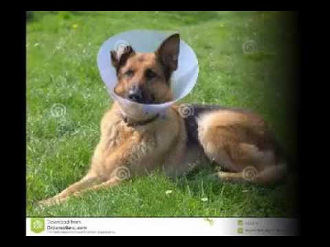 Kennel Cough Youtube