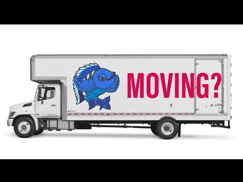 How To Move With Fish