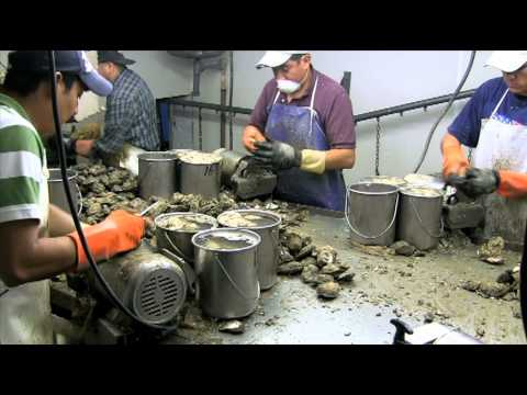 Out and About With Rich Cotton An Oyster Shucking House