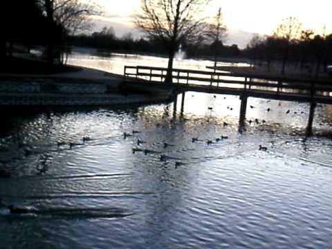 Wild Duck Pond